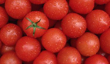 Rusya 1 milyon domatesi imha etti