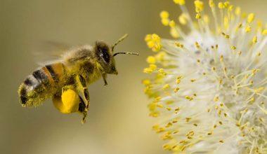 Baharda polen yorgunluk ve burun akıntısı yapıyor