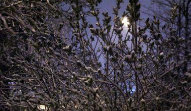 Erzurum'da baharın ilk günlerinde kar
