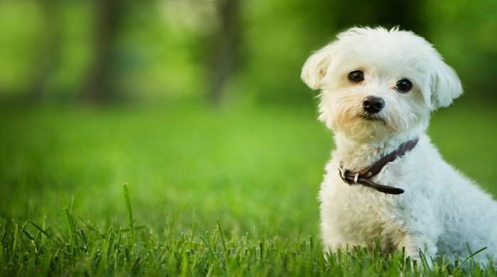 Çin Hava Yolları Evcil Hayvan Yolcuğuna İzin Veriyor