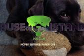 Köpek Eğitimi Adalar