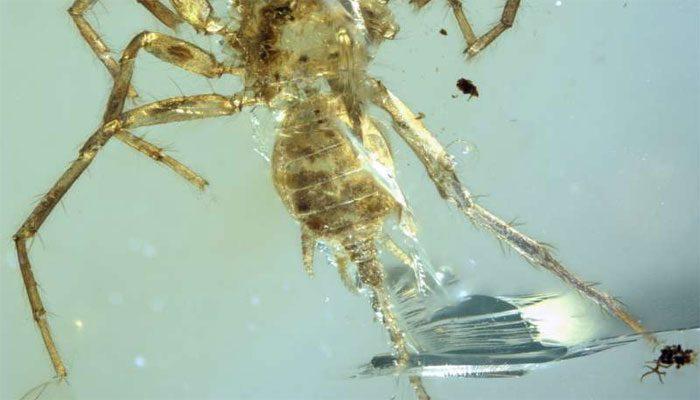 100 milyon Yaşında Örümcek Bulundu