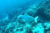 Robotik balık, dalışını deniz yaşamının daha fazlasını ortaya çıkartıcak
