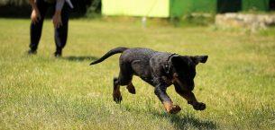 Yavru köpek yetiştirmek çok eğlencelidir