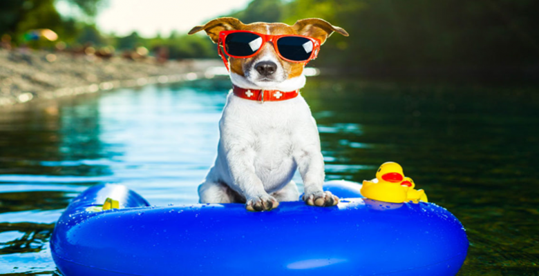 Köpek (Mama/Su Kapları, Deniz ve Havuz, Aksesuarları) Ürünleri Alırken Nelere Dikkat Edilmeli?